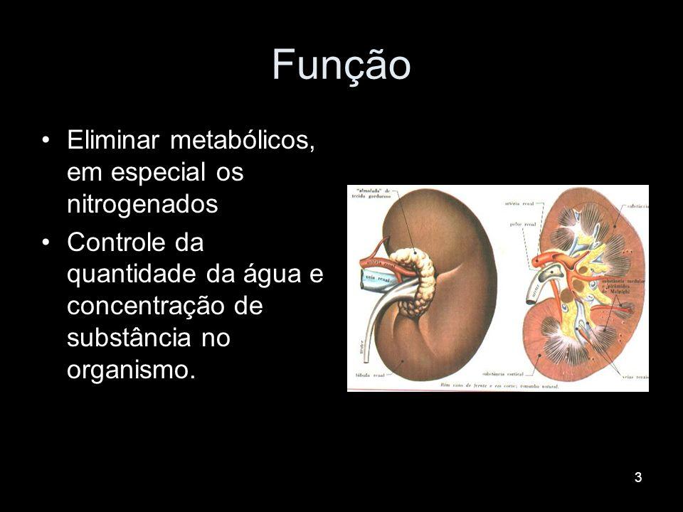 3 Função Eliminar metabólicos, em especial os nitrogenados Controle da quantidade da água e concentração de substância no organismo.