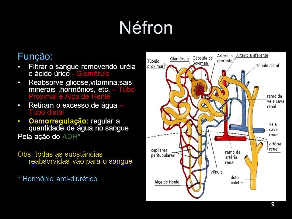 9 Néfron Função: Filtrar o sangue removendo uréia e ácido úrico - Glomérulo Reabsorve glicose,vitamina,sais minerais,hormônios, etc. – Tubo Proximal e