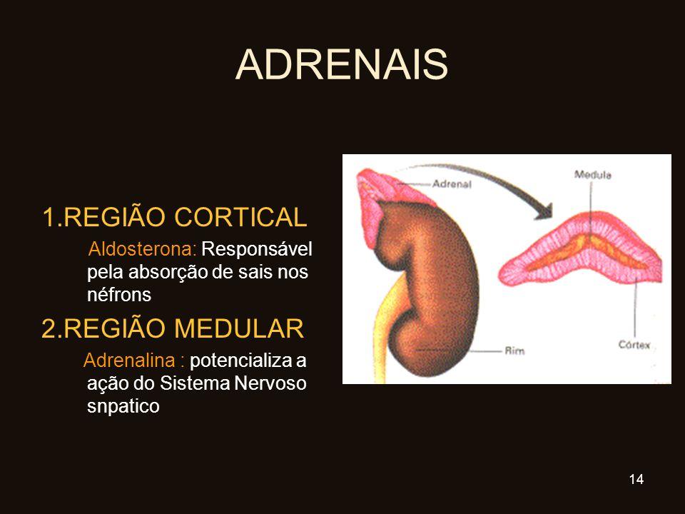 ADRENAIS 1.REGIÃO CORTICAL Aldosterona: Responsável pela absorção de sais nos néfrons 2.REGIÃO MEDULAR Adrenalina : potencializa a ação do Sistema Ner