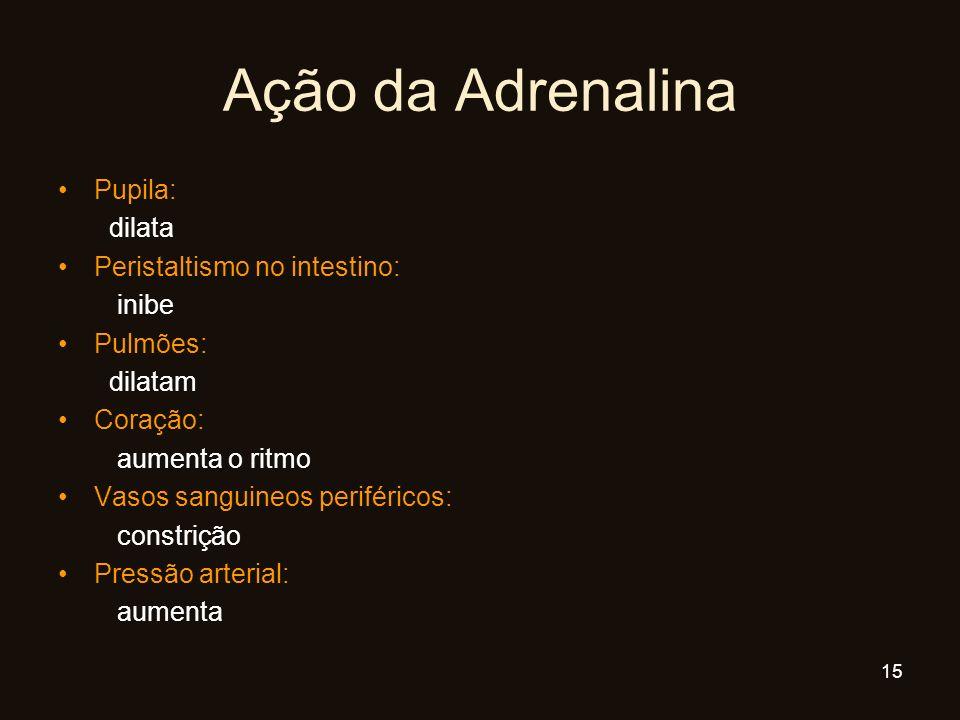Ação da Adrenalina Pupila: dilata Peristaltismo no intestino: inibe Pulmões: dilatam Coração: aumenta o ritmo Vasos sanguineos periféricos: constrição
