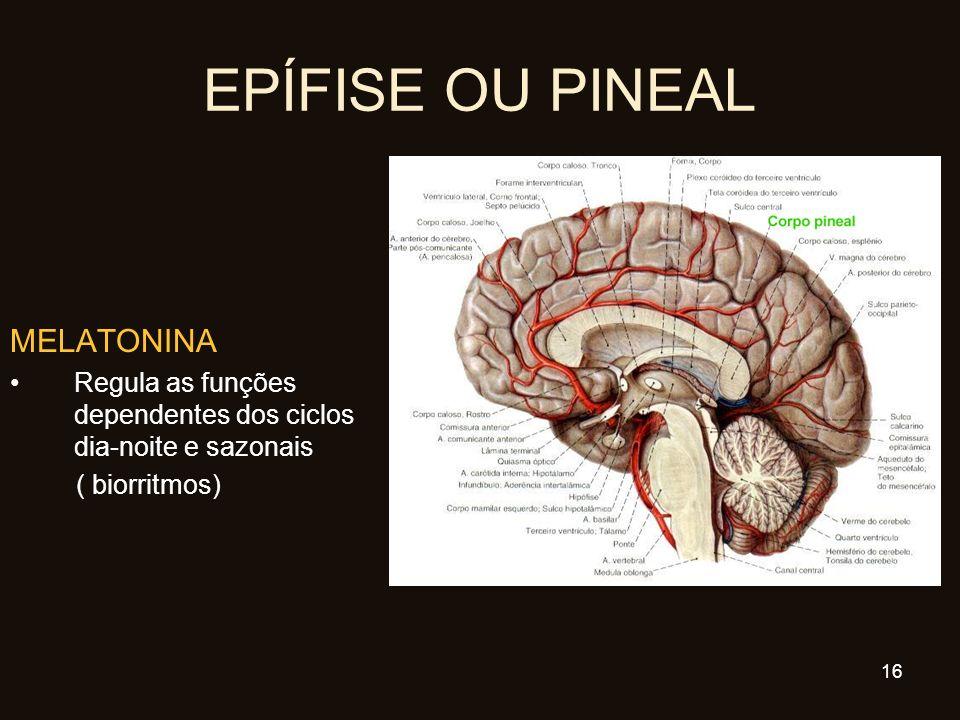 EPÍFISE OU PINEAL MELATONINA Regula as funções dependentes dos ciclos dia-noite e sazonais ( biorritmos) 16