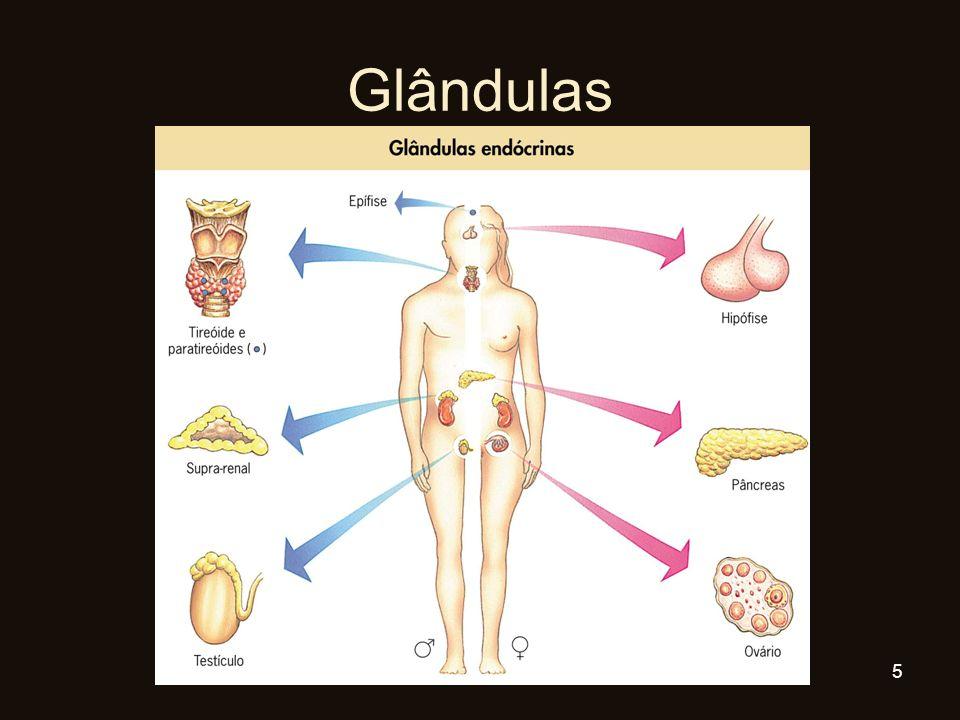 Glândulas 5