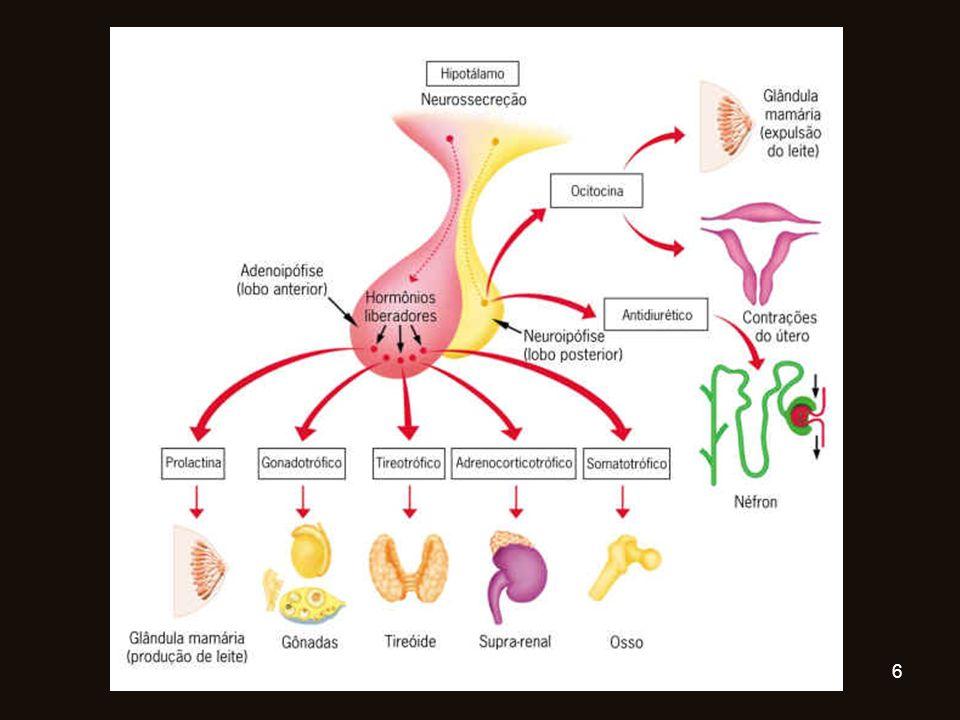HIPÓFISE Glândula pequena Abaixo do cérebro Dois lóbulos: Anterior- Adeno-hipófise Posterior – Neuro-hipófise 7