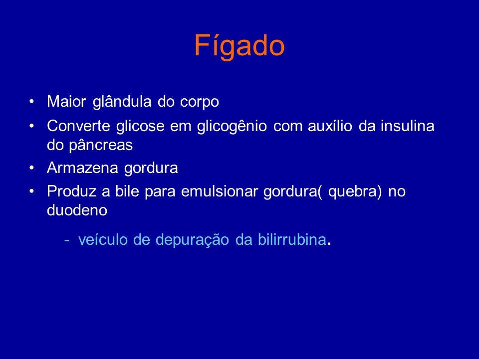 Fígado Maior glândula do corpo Converte glicose em glicogênio com auxílio da insulina do pâncreas Armazena gordura Produz a bile para emulsionar gordu