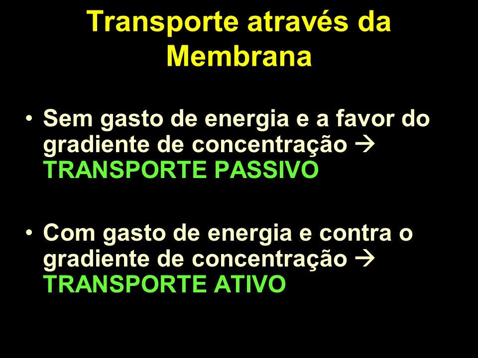 Transporte através da Membrana Sem gasto de energia e a favor do gradiente de concentração TRANSPORTE PASSIVO Com gasto de energia e contra o gradient