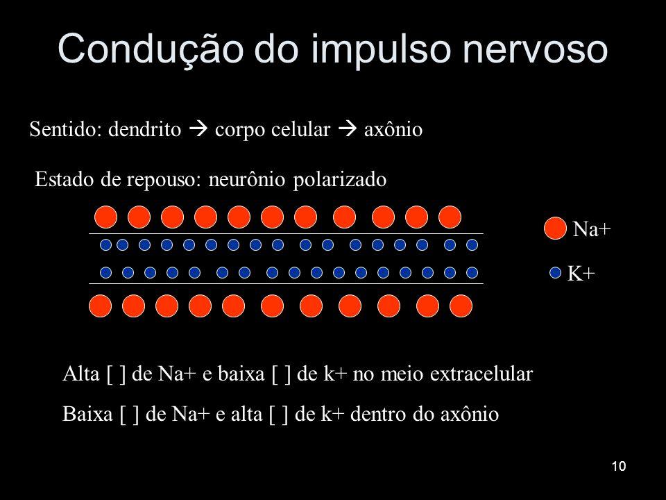 9 SINAPSE ou JUNÇÃO SINAPSE ou JUNÇÃO NEUROMUSCULAR NEUROMUSCULAR PLACA MOTORA: PLACA MOTORA: neurônio motor(1) + fibra muscular(3) neurônio motor(1)