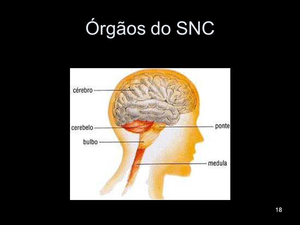 17 SNC Função: processamento e integração das informações. Formado pelo encéfalo (alojado no cranio) e pela medula espinhal (interior das vértebras –