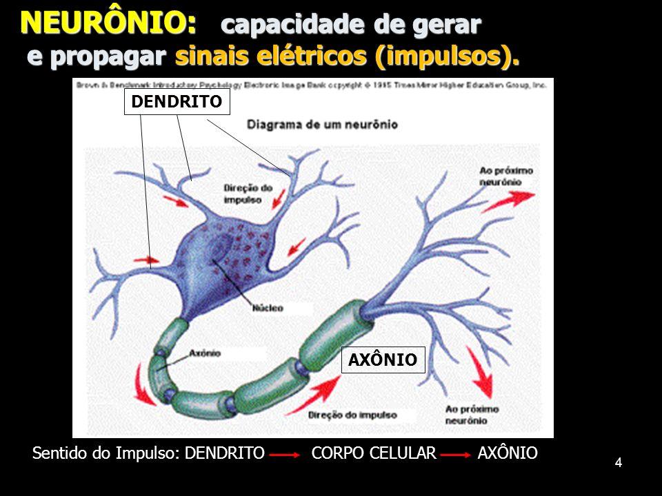 3 SISTEMA NERVOSO LOCALIZAÇÃO: LOCALIZAÇÃO: -CORPOS CELULARES: encéfalo, medula raquidiana e gânglios nervosos (centros nervosos). -Prolongamentos: (D