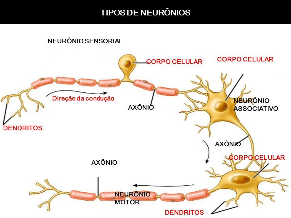 4 Sentido do Impulso: DENDRITO CORPO CELULAR AXÔNIO DENDRITO AXÔNIO NEURÔNIO: capacidade de gerar e propagar sinais elétricos (impulsos). e propagar s