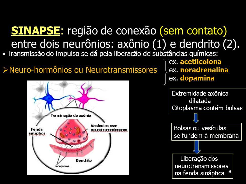 5 TIPOS DE NEURÔNIOS DENDRITOS CORPO CELULAR DENDRITOS Direção da condução AXÔNIO NEURÔNIO SENSORIAL NEURÔNIO ASSOCIATIVO NEURÔNIO MOTOR