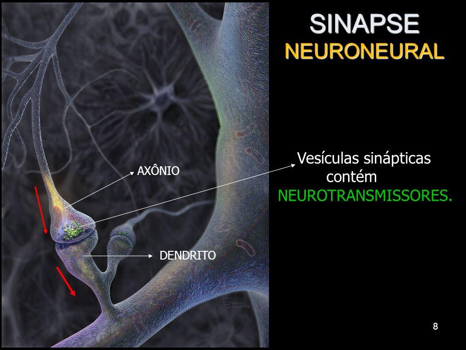 7 Sinapses Interneuronais: neurônio – neurônio Neuromusculares: neurônio – músculo Neuroglandulares: neurônio – célula glandular