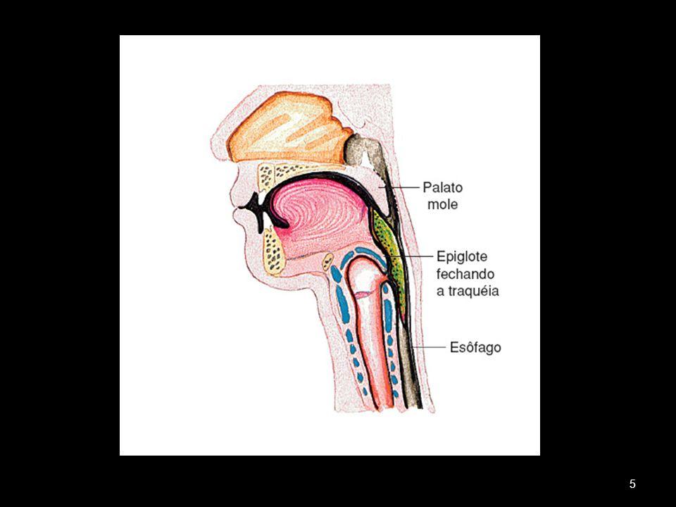 Saliva : age na boca Rica em ptialina Transforma amido em maltose,um dissacarídeo Suco Gástrico age no estômago HCl - ação bacteriana, desmineralização - forma a pepsina Pepsina - fragmenta as proteínas - é ácida Renina - coagula o leite para a digestão - produzida por lactantes e crianças Obs.: o estômago é protegido por um muco espesso de polissacarídeo 6
