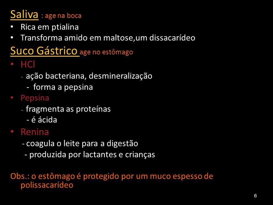 Estômago 7
