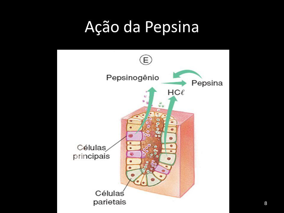 Ação da Pepsina 8