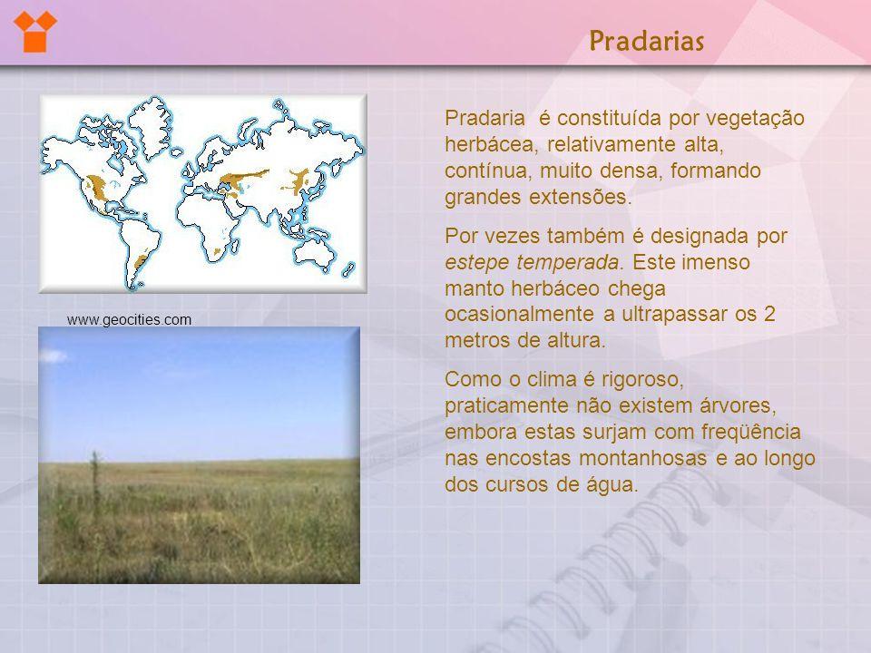Pradaria é constituída por vegetação herbácea, relativamente alta, contínua, muito densa, formando grandes extensões. Por vezes também é designada por