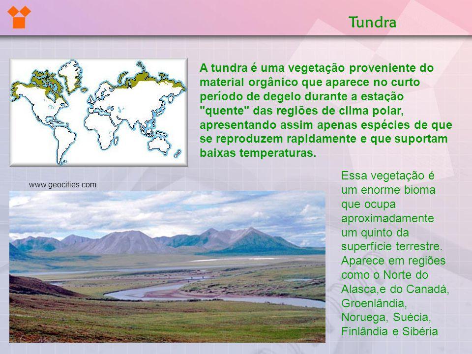 A tundra é uma vegetação proveniente do material orgânico que aparece no curto período de degelo durante a estação