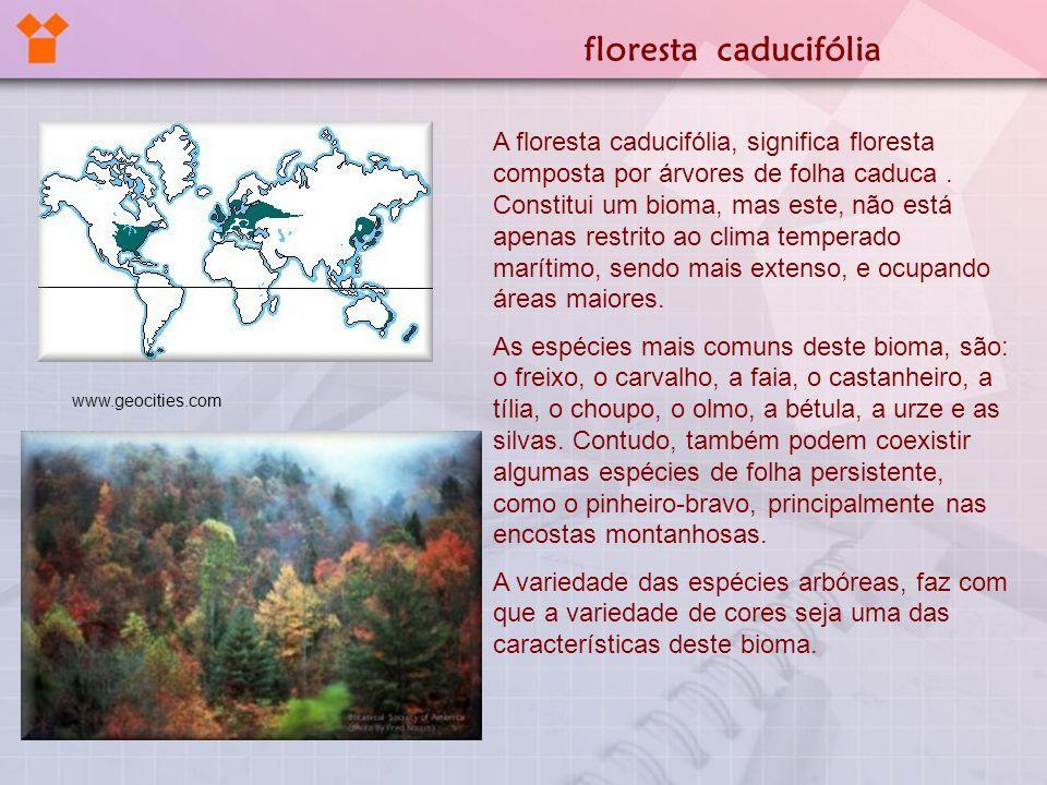 A floresta caducifólia, significa floresta composta por árvores de folha caduca. Constitui um bioma, mas este, não está apenas restrito ao clima tempe
