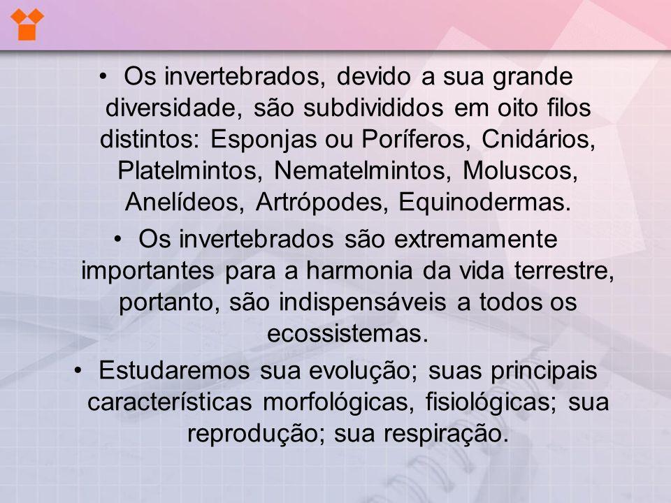 PORÍFEROS (www.bioloja.com/info)