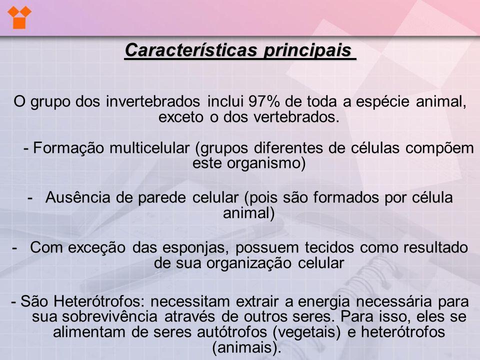 Características principais Características principais O grupo dos invertebrados inclui 97% de toda a espécie animal, exceto o dos vertebrados. - Forma