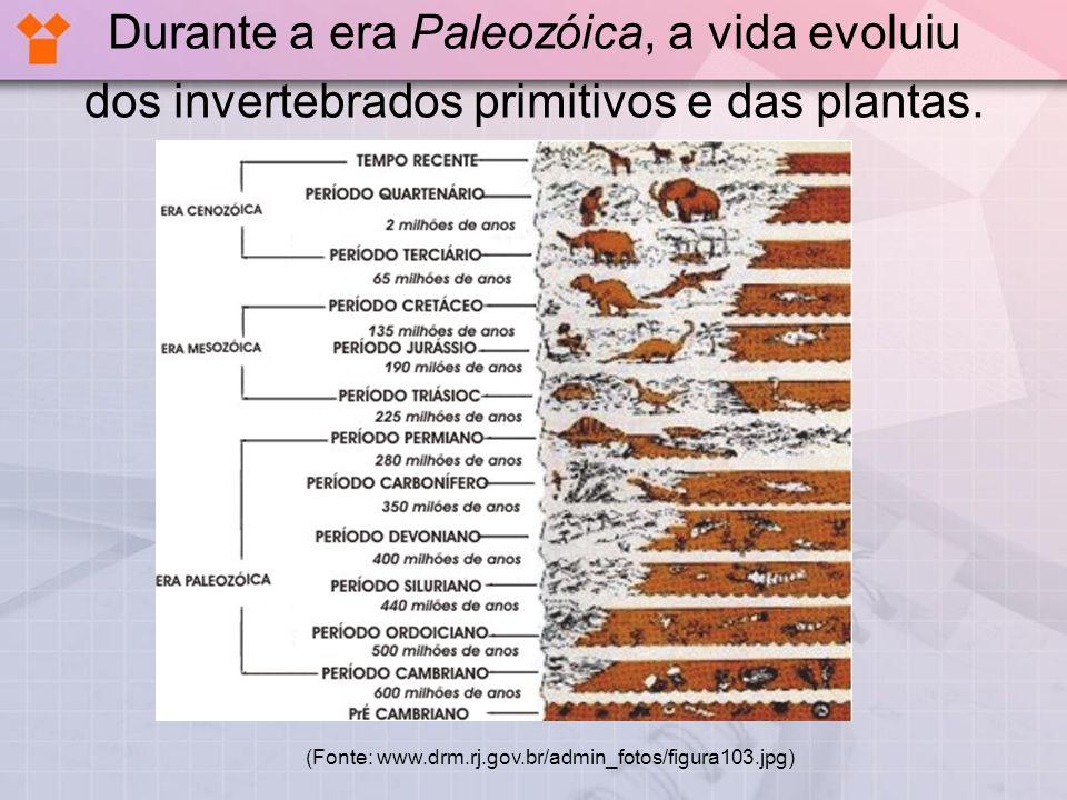 Durante a era Paleozóica, a vida evoluiu dos invertebrados primitivos e das plantas. (Fonte: www.drm.rj.gov.br/admin_fotos/figura103.jpg)