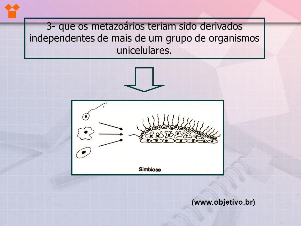 3- que os metazoários teriam sido derivados independentes de mais de um grupo de organismos unicelulares. (www.objetivo.br)