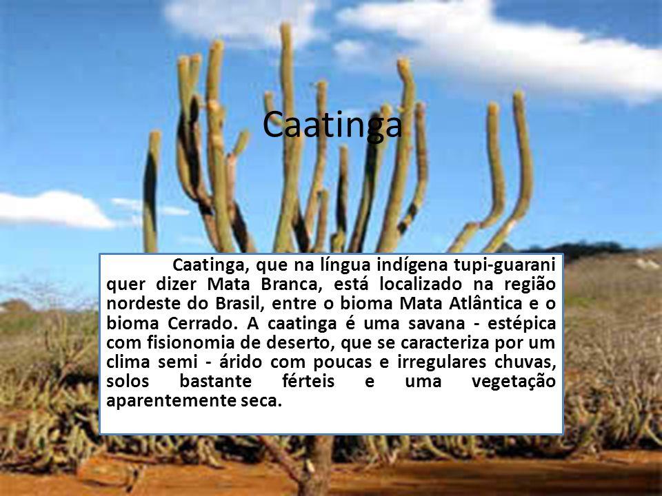 Caatinga Caatinga, que na língua indígena tupi-guarani quer dizer Mata Branca, está localizado na região nordeste do Brasil, entre o bioma Mata Atlânt