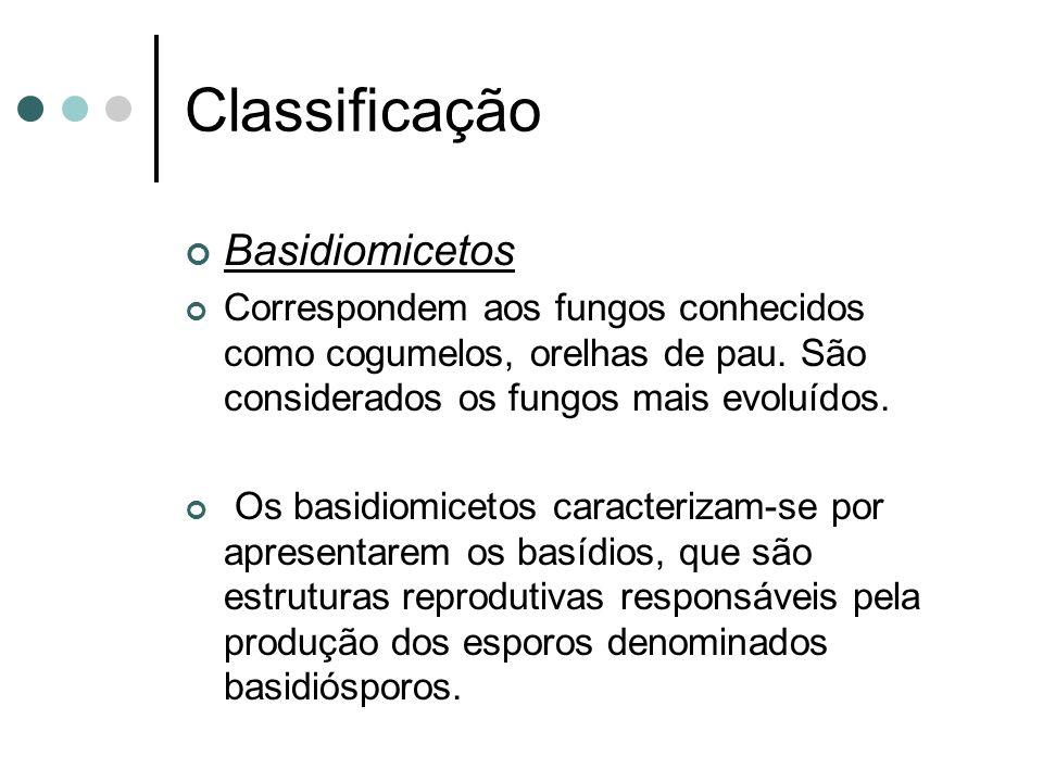 Classificação Basidiomicetos Correspondem aos fungos conhecidos como cogumelos, orelhas de pau.