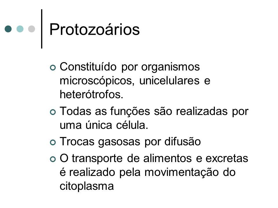 Protozoários Constituído por organismos microscópicos, unicelulares e heterótrofos.