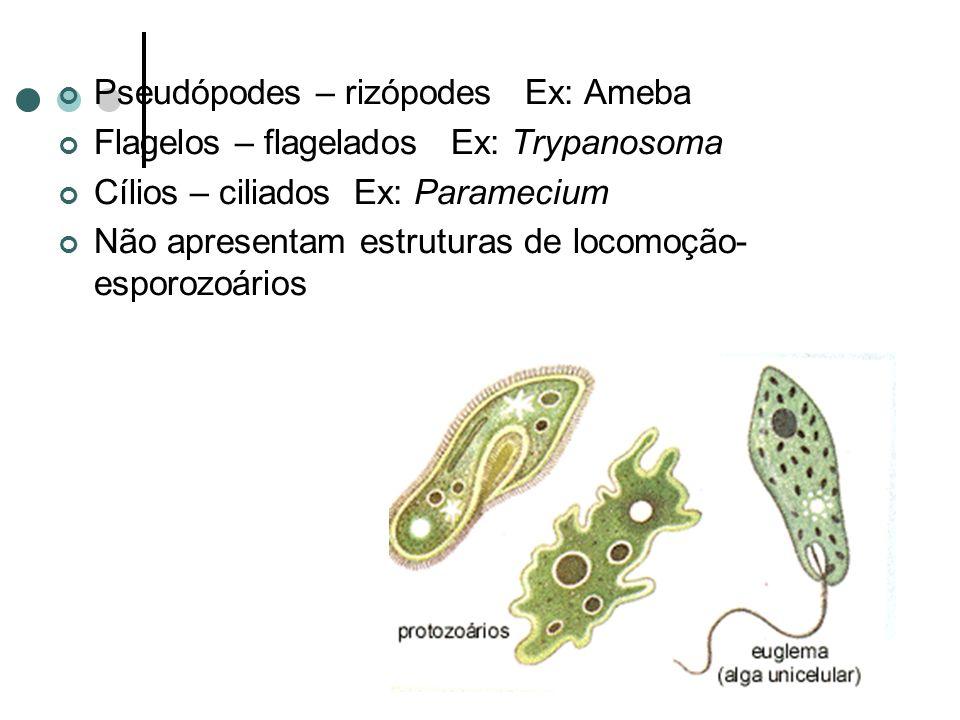 Pseudópodes – rizópodes Ex: Ameba Flagelos – flagelados Ex: Trypanosoma Cílios – ciliados Ex: Paramecium Não apresentam estruturas de locomoção- esporozoários