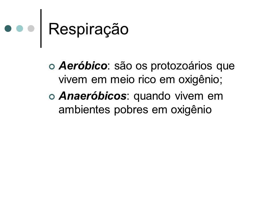 Respiração Aeróbico: são os protozoários que vivem em meio rico em oxigênio; Anaeróbicos: quando vivem em ambientes pobres em oxigênio