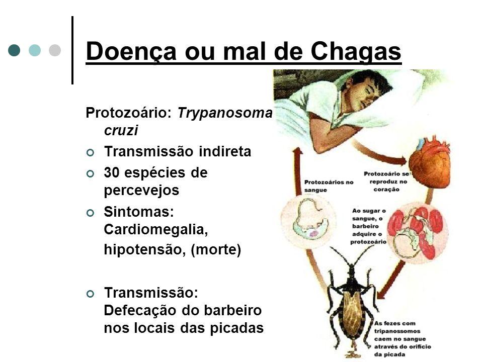 Doença ou mal de Chagas Protozoário: Trypanosoma cruzi Transmissão indireta 30 espécies de percevejos Sintomas: Cardiomegalia, hipotensão, (morte) Transmissão: Defecação do barbeiro nos locais das picadas