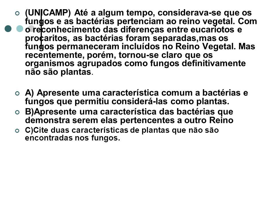 (UNICAMP) Até a algum tempo, considerava-se que os fungos e as bactérias pertenciam ao reino vegetal.