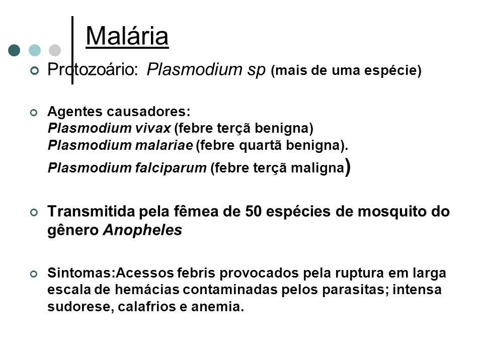 Malária Protozoário: Plasmodium sp (mais de uma espécie) Agentes causadores: Plasmodium vivax (febre terçã benigna) Plasmodium malariae (febre quartã benigna).