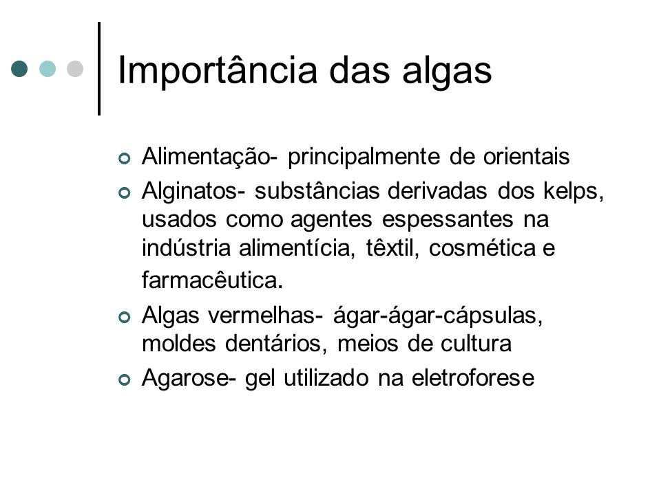 Importância das algas Alimentação- principalmente de orientais Alginatos- substâncias derivadas dos kelps, usados como agentes espessantes na indústria alimentícia, têxtil, cosmética e farmacêutica.
