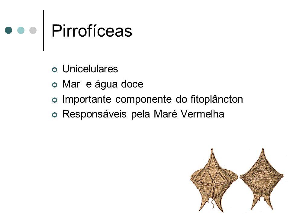 Pirrofíceas Unicelulares Mar e água doce Importante componente do fitoplâncton Responsáveis pela Maré Vermelha