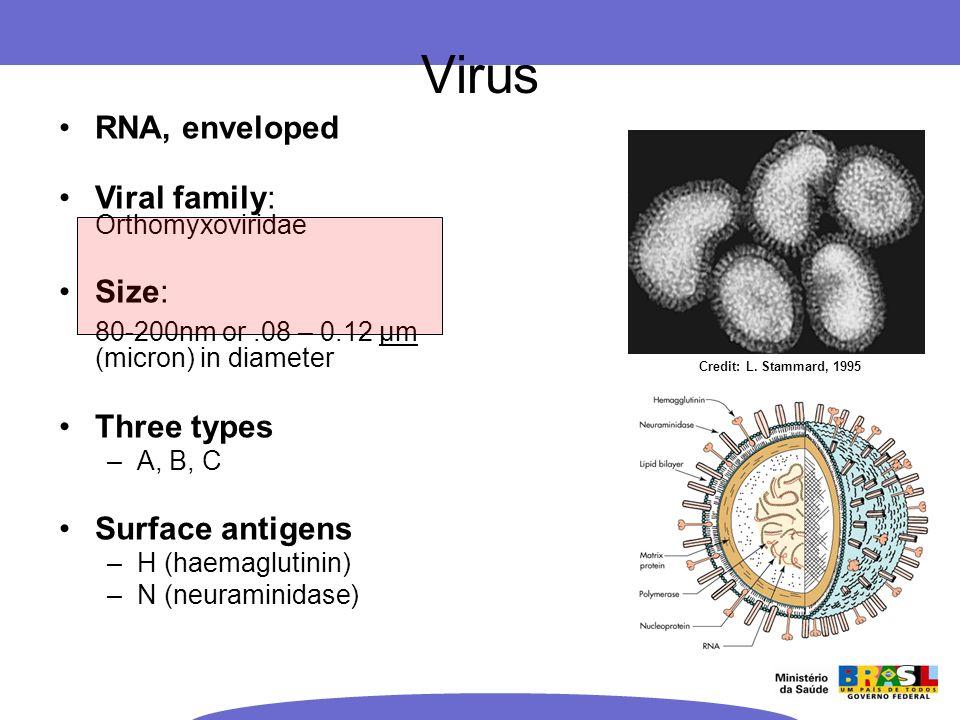 Credit: L. Stammard, 1995 RNA, enveloped Viral family: Orthomyxoviridae Size: 80-200nm or.08 – 0.12 μm (micron) in diameter Three types –A, B, C Surfa