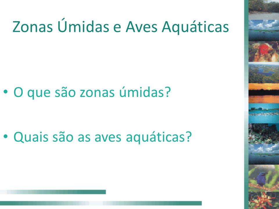 Zonas Úmidas e Aves Aquáticas O que são zonas úmidas? Quais são as aves aquáticas?