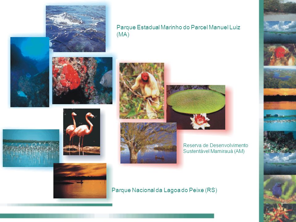 Parque Estadual Marinho do Parcel Manuel Luiz (MA) Reserva de Desenvolvimento Sustentável Mamirauá (AM) Parque Nacional da Lagoa do Peixe (RS)