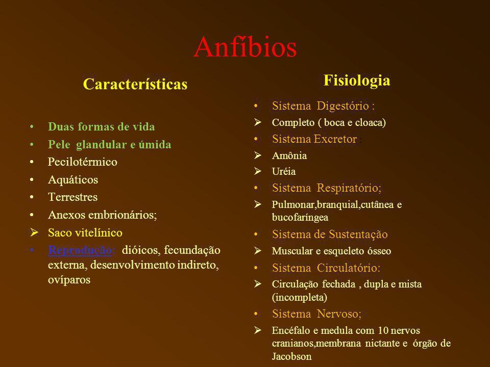Anfíbios Características Duas formas de vida Pele glandular e úmida Pecilotérmico Aquáticos Terrestres Anexos embrionários; Saco vitelínico Reprodução