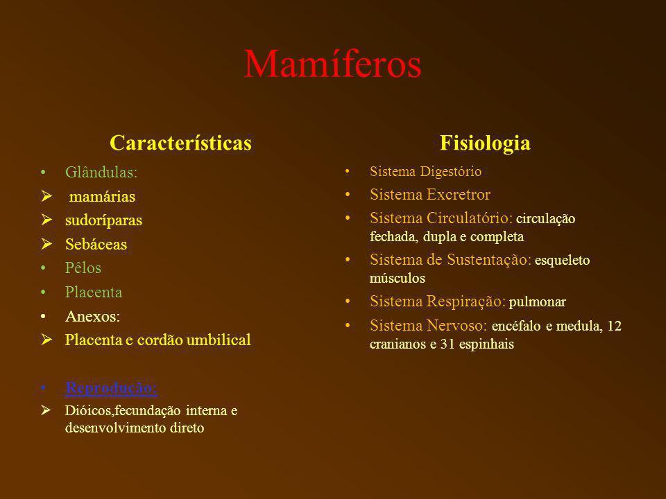 Mamíferos Características Glândulas: mamárias sudoríparas Sebáceas Pêlos Placenta Anexos: Placenta e cordão umbilical Reprodução: Dióicos,fecundação i