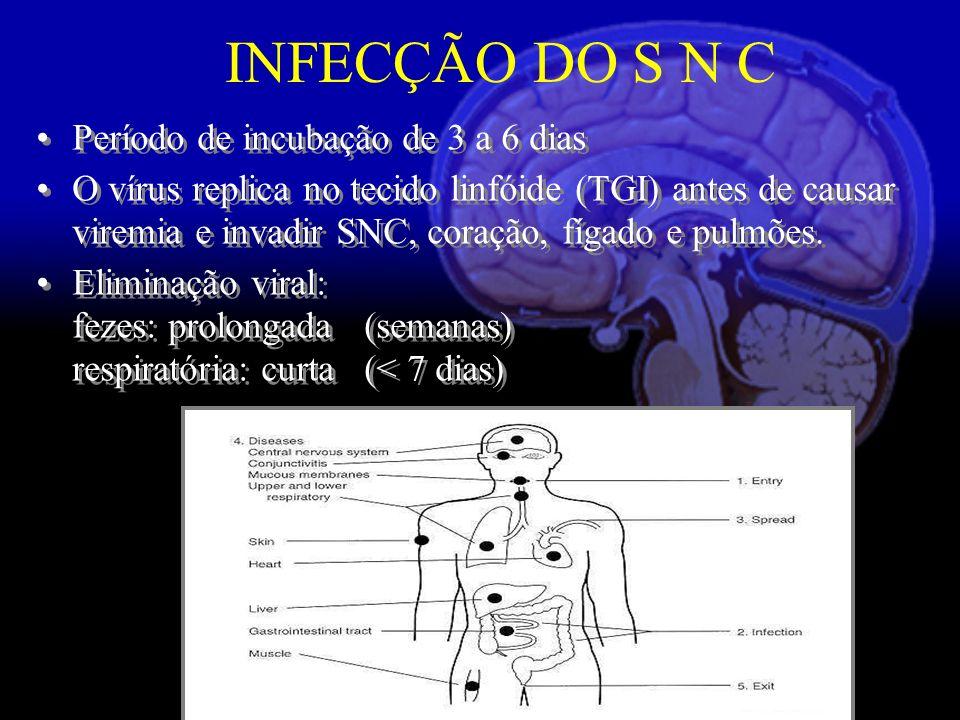 Período de incubação de 3 a 6 dias O vírus replica no tecido linfóide (TGI) antes de causar viremia e invadir SNC, coração, fígado e pulmões.