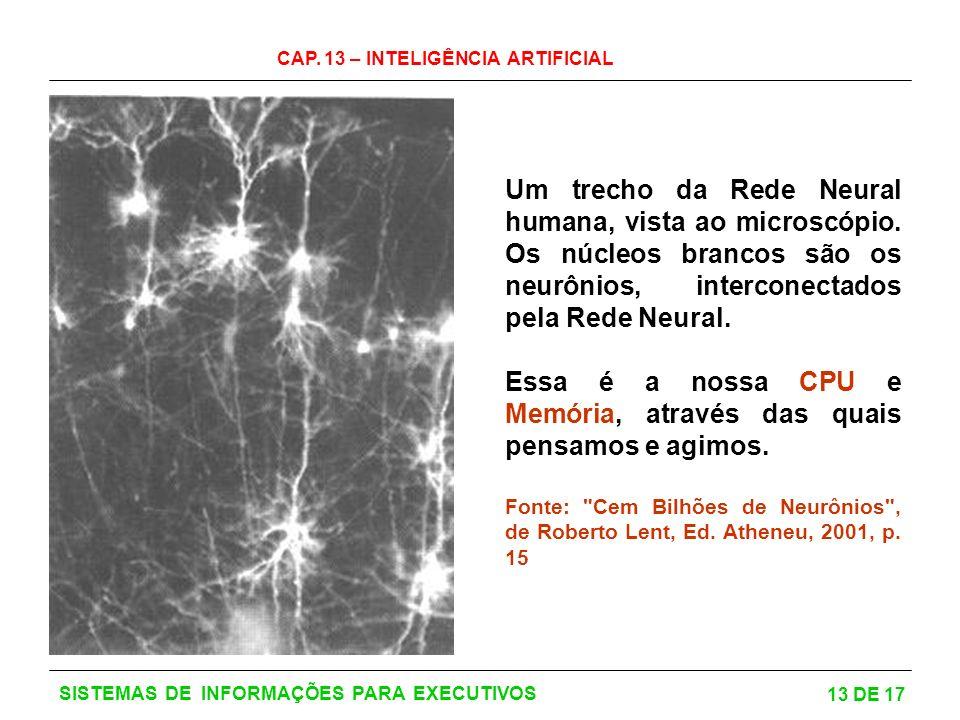 CAP. 13 – INTELIGÊNCIA ARTIFICIAL 13 DE 17 SISTEMAS DE INFORMAÇÕES PARA EXECUTIVOS Um trecho da Rede Neural humana, vista ao microscópio. Os núcleos b