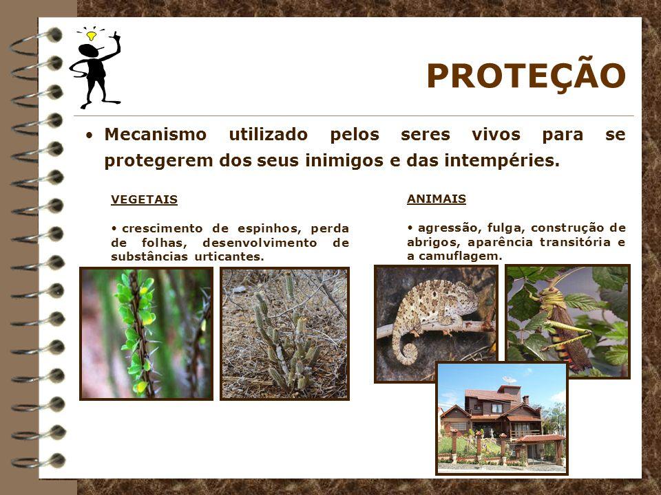 PROTEÇÃO Mecanismo utilizado pelos seres vivos para se protegerem dos seus inimigos e das intempéries. VEGETAIS crescimento de espinhos, perda de folh