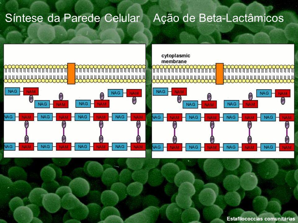 Estafilococcias comunitárias Ação de Beta-Lactâmicos Síntese da Parede Celular