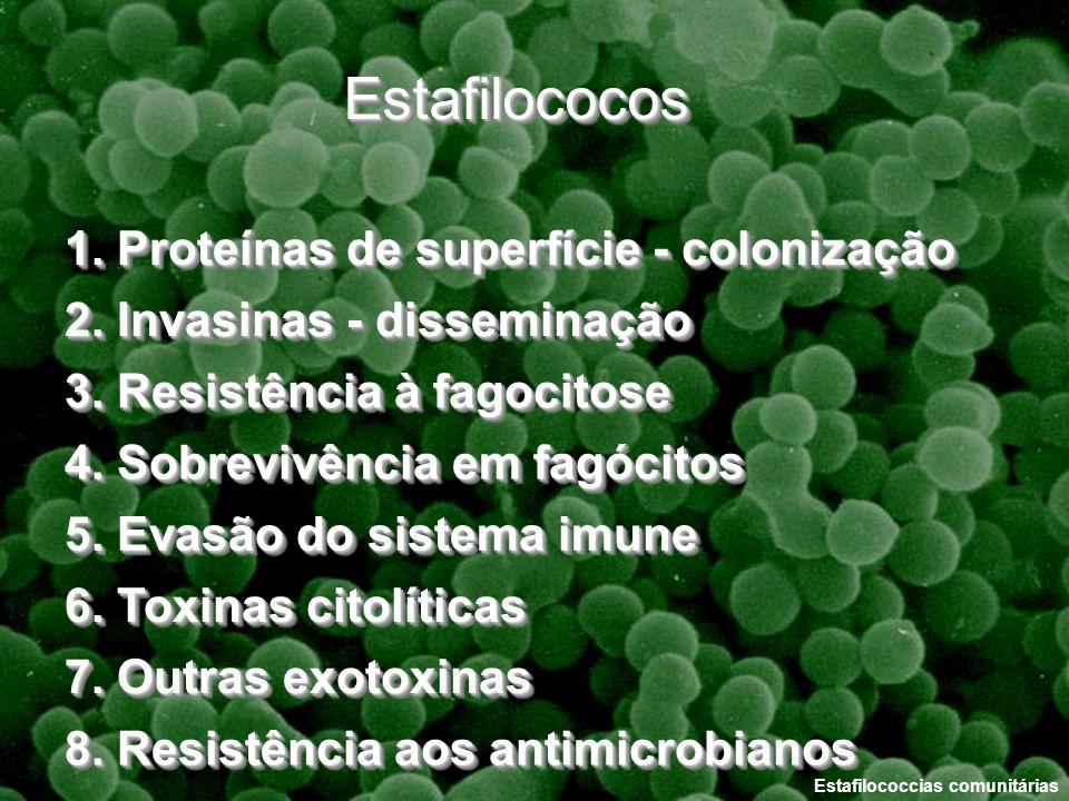 Estafilococcias comunitárias 1. Proteínas de superfície - colonização 2. Invasinas - disseminação 3. Resistência à fagocitose 4. Sobrevivência em fagó