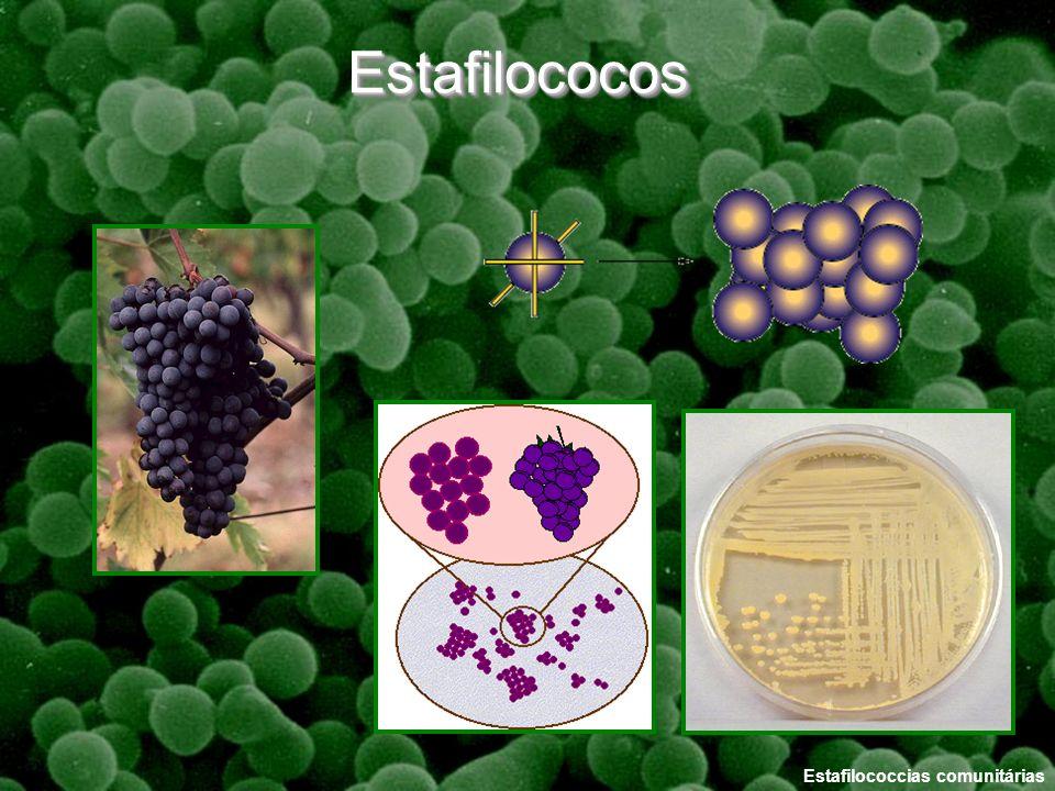 Estafilococcias comunitárias EstafilococosEstafilococos