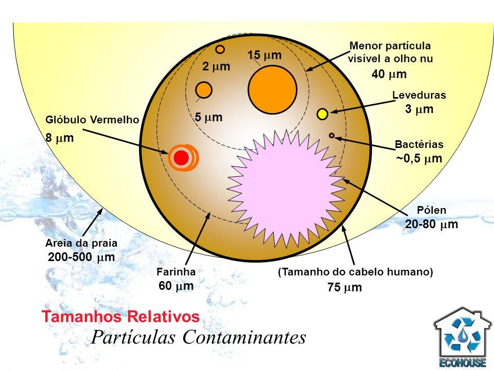 5 m 15 m 2 m Menor partícula visível a olho nu 40 m (Tamanho do cabelo humano) 75 m Glóbulo Vermelho 8 m Leveduras 3 m Bactérias ~0,5 m Pólen 20-80 m