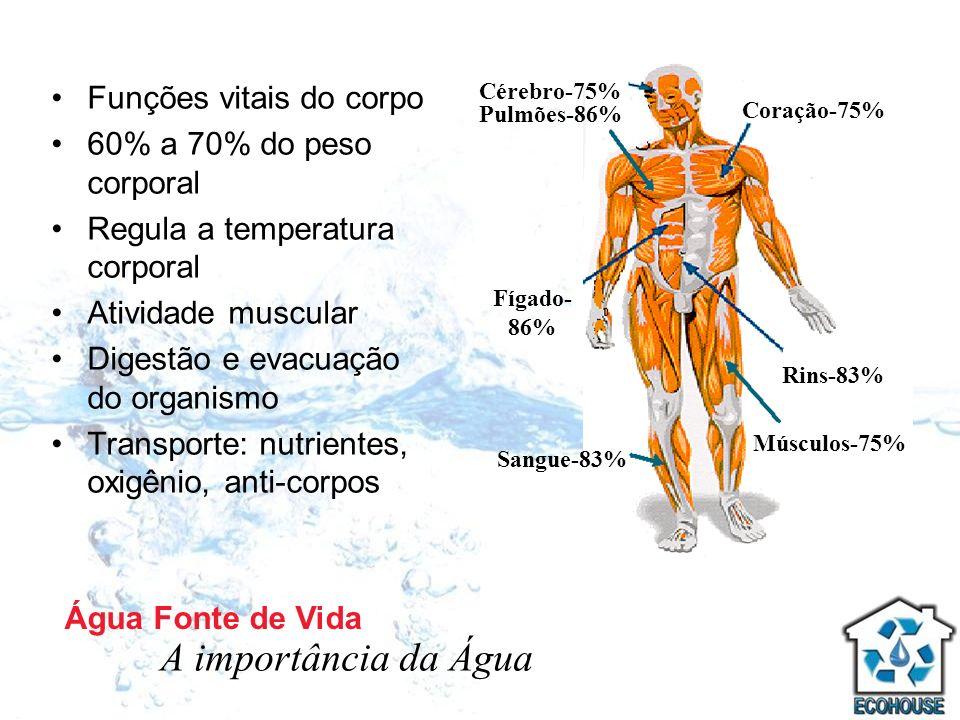 Funções vitais do corpo 60% a 70% do peso corporal Regula a temperatura corporal Atividade muscular Digestão e evacuação do organismo Transporte: nutr