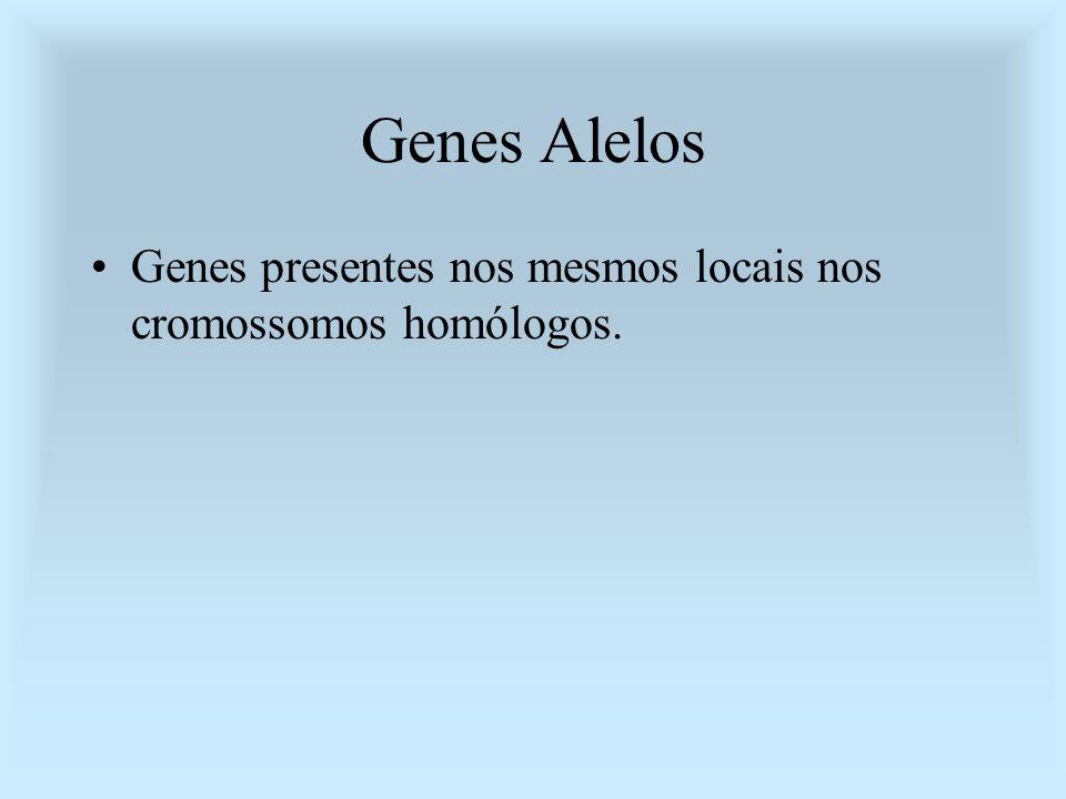Genes Alelos Genes presentes nos mesmos locais nos cromossomos homólogos.