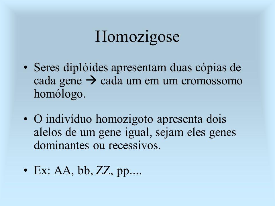 Homozigose Seres diplóides apresentam duas cópias de cada gene cada um em um cromossomo homólogo. O indivíduo homozigoto apresenta dois alelos de um g